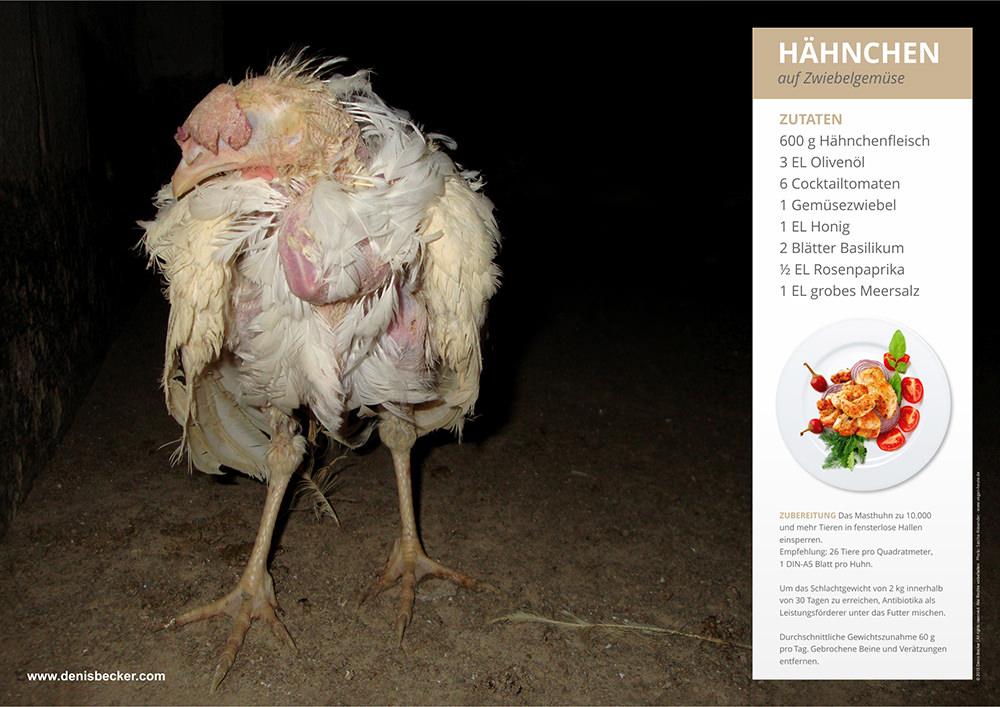 denis becker, plakate gegen massentierhaltung, hühnermast, geflügelmast, geflügelhaltung, zerrupft, hühnchen, poster